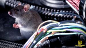 bọc dây điện chống chuột bằng ống thép ruột gà