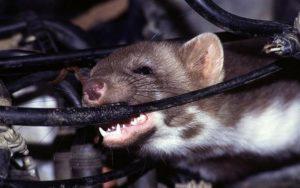 chống chuột cắn dây dẫn điện